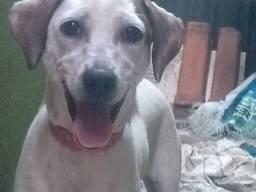 Estou doando essa cachorrinha se alguém se interessar me chame no watssapp *