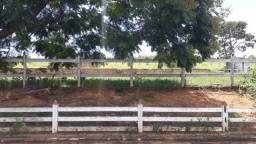 Fazenda 90 Hc Codisburgo R$1.35Mi