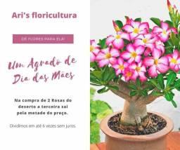 Promoção do dia das mães é na Ari's Floricultura