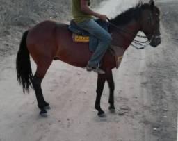 Cavalo de esteira,