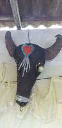 Vendo carcaça de cabeça de búfalo valor$250