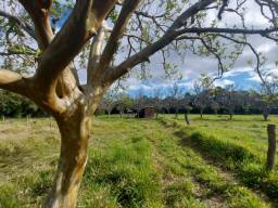 Velleda oferece barbada, 1 hectare com casa simples por 39 mil, c/ sanga