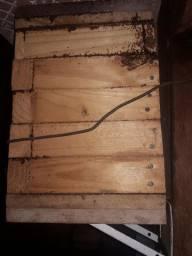 Matriz de abelha ASF ( Borá ou Jataizão)