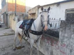 Cavalo Mistiço de quarto de milha2.800