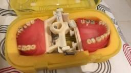 Manequim odontológico articulado