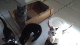 Doa se lindos gatinhos 3 meses