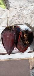 Coração de Bananeira para remédio doação