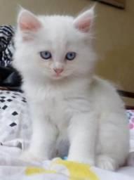 Doacao de gatinho