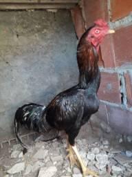 Troco frango em um sebite que mim agrade