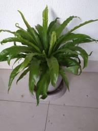 Vendo lindas plantas