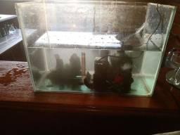 Vendo aquário de vidro