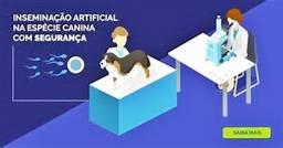 inseminação em cães (vamos ao local)