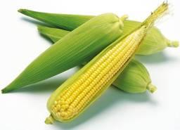 Milho verde direto do produtor no GAMA