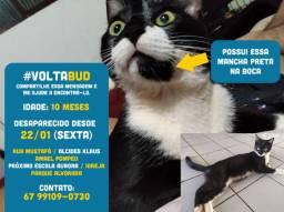 Procuro Gato no Parque Alvorada - Dourados MS