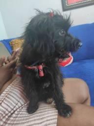 Cachorro porte médio