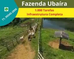Não perca: Fazenda 1.000 Tarefas, no Município de Ubaíra, abastecida com energia solar