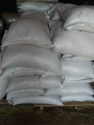 Venda de milho direto da Fazenda Monte Alegre norte do Mato Grosso
