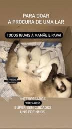 Gatinhos adoção *