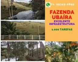 Oportunidade em Ubaíra:fazenda com 1.000 tarefas, abastecida com energia solar