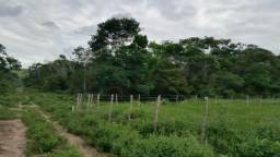 Chácaras em Oliveira dos Campinhos/ Santo Amaro - Próximo a Feira de Santana e SSA
