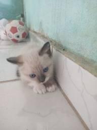 Lindos filhotes de gatinhos para doação