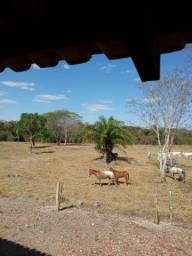 Terra assentamento de 4 anos 17 hectare
