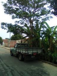Transportes Pedro Anápolis.
