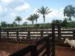 Fazenda diferenciada - Castelo dos Sonhos - Altamira/PA