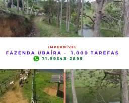 Sensacional fazenda no Município de Ubaíra, com 1.000 tarefas, energia solar