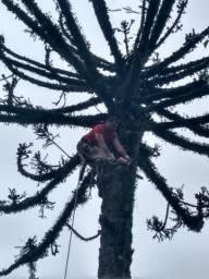 Poda de árvores