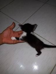 Filhotes de gato para doação