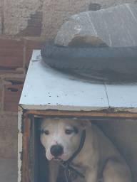 Cachorro pitubu