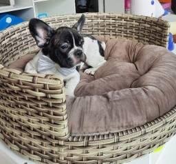Dia das Mães no da madre pet shop.... bulldog frances macho em 10x de 280,00!!