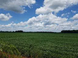 Vende-se 44 hectares de terra para cultura de soja e milho.