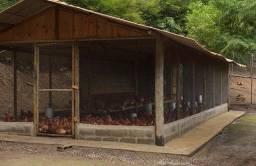 Ovos e galinhas caipira de granja chamar no whatsapp ou ligar ,8,3 9,8,1,6,5-8,2,1,8,