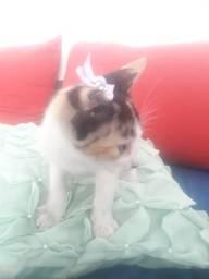 Doando uma gatinha bebe