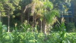 Terreno à venda, 1000 m² por R$ 85.000 - Areia Branca - Mandirituba/PR