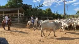 Linda Fazenda em Casimiro de Abreu-RJ
