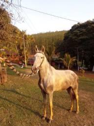 Egua MM pampa de tordilho EXERTADA