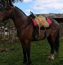 Vende-se Cavalo Manga Larga Puro Machador
