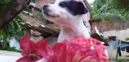 Uma linda Cachorrinha ? Para Doação ?? zap *)