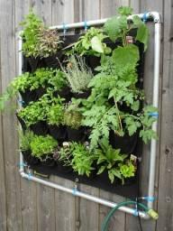 Horta Orgânica em casa - Curso cultivando horta