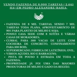 Fazenda de 8.000 tarefas (2645 Ha)em Pedro Alexandre/BA, plana, ótima para milho/soja/gado