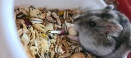 Vende- se Hamster e Casinha
