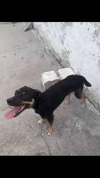 doação dessa linda cadelinha