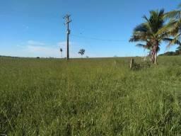 Vende-se Fazenda Cidade Região de Jales-SP