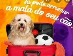 Hotel de cachorro