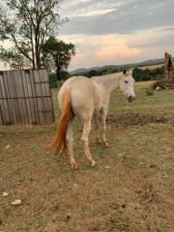 Vende-se um cavalo