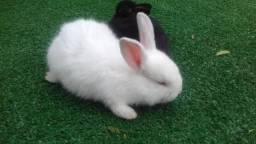 Vende-se filhotes de coelhos.