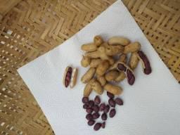 Sementes de amendoim roxo